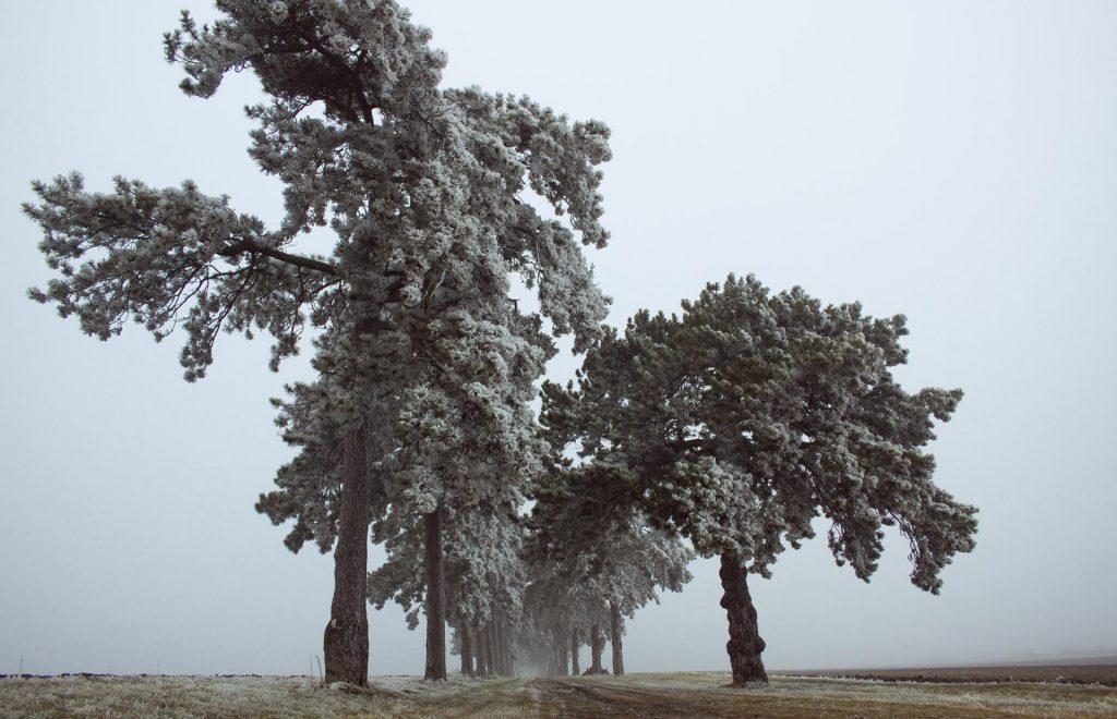 Frosen mist
