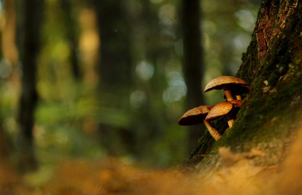 Mushrooms in the bark