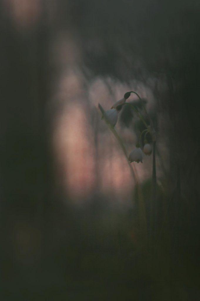Grey still-life