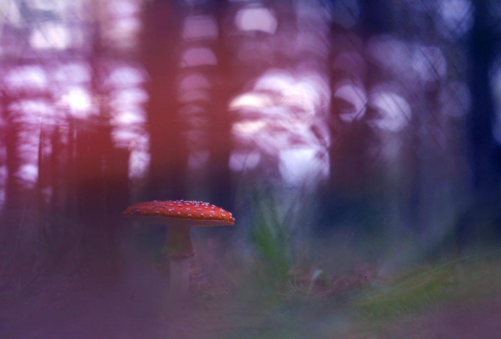 Mushroom shadows