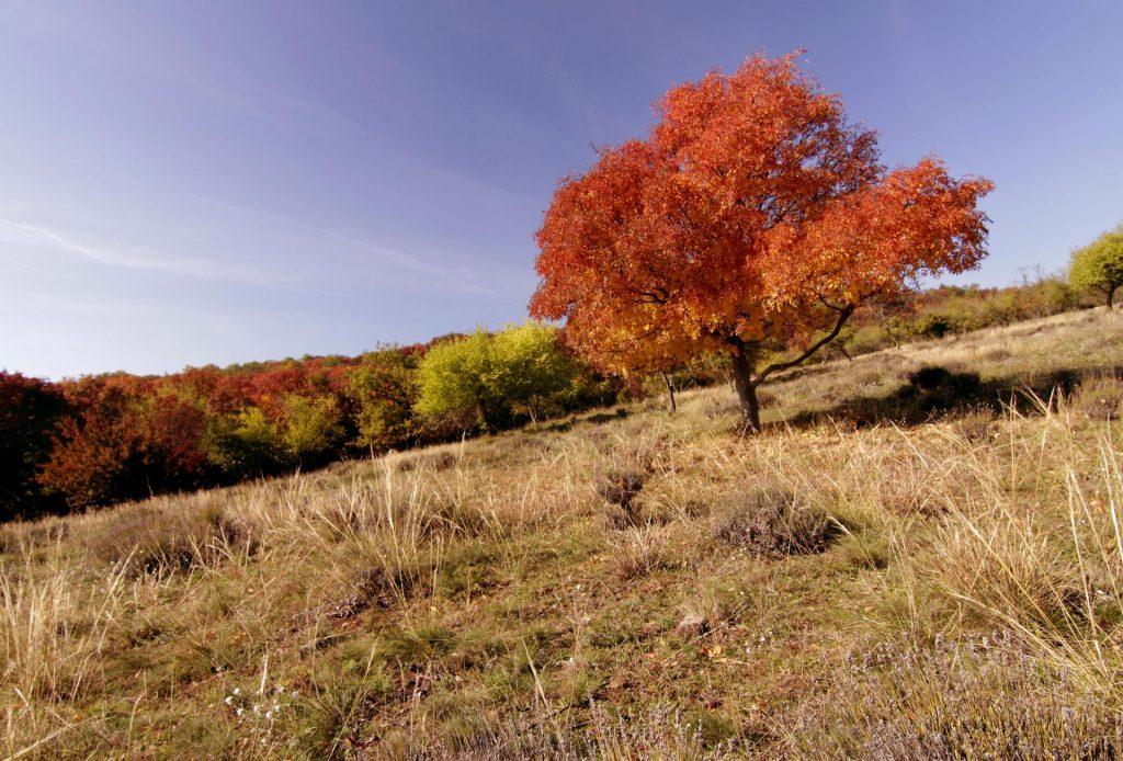 Autumn colouring