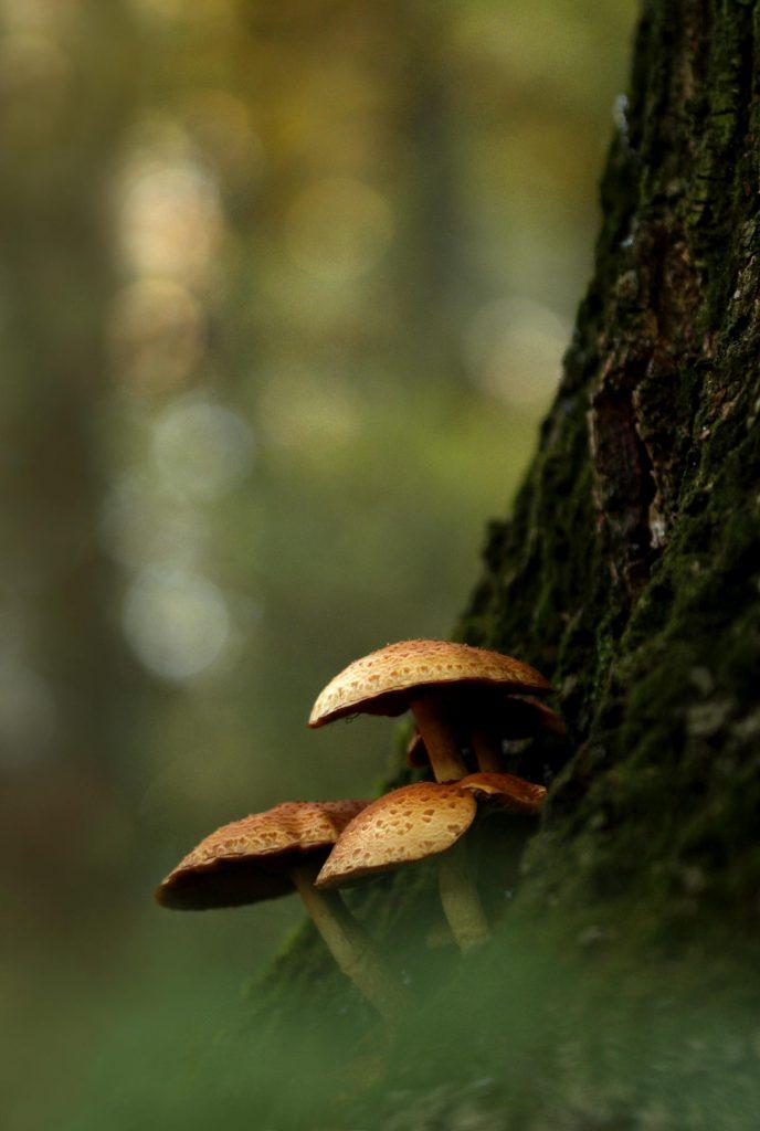 Still-life with mushrooms