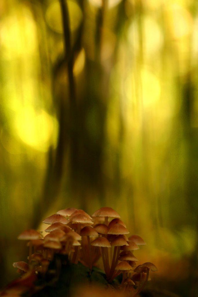 Mushrooms in yellow